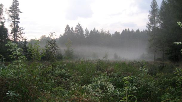 Ráno cestou na Holubník